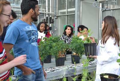 Urban Agriculture and Green Cities